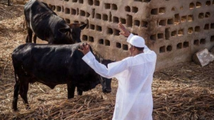 I may have been involved in herders-farmers clashes if I didn't go to school – Buhari