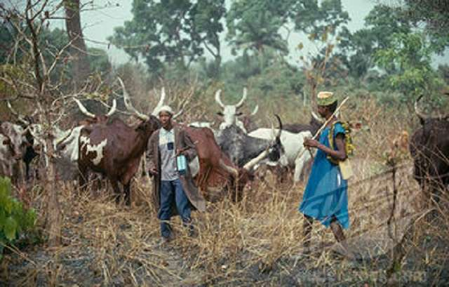 NEC bans movement of herdsmen in Benue, Taraba, three other states