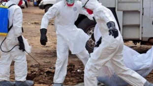 WHO raises Ebola risk to 'very high' in Africa