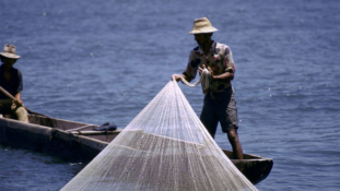 Overfishing a threat to global key protein source' sustainability –UN
