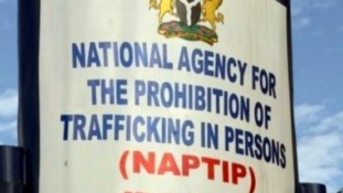 NAPTIP rescues 52 victims of human trafficking in Edo/Delta