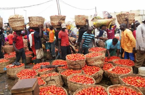 Rotten tomatoes can cause cancer, NAFDAC warns