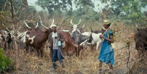 Miyetti Allah to Herdsmen: Remain where you are and defend yourself against ethnic militia