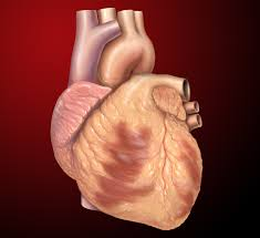 Avoid heart-related conditions after outcomes of elections, Expert advises politicians