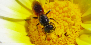 Bees discovered living in a woman's eye: 'They were still intact and all alive'