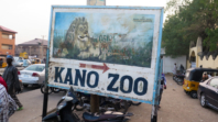 Gorilla 'swallows' N6.8m in Kano zoo