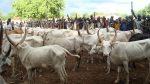Fulani herdsmen insist on implementation of Ruga Settlements