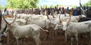 Ruga is private business and so what?